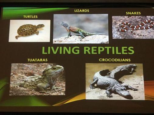 Living Reptiles